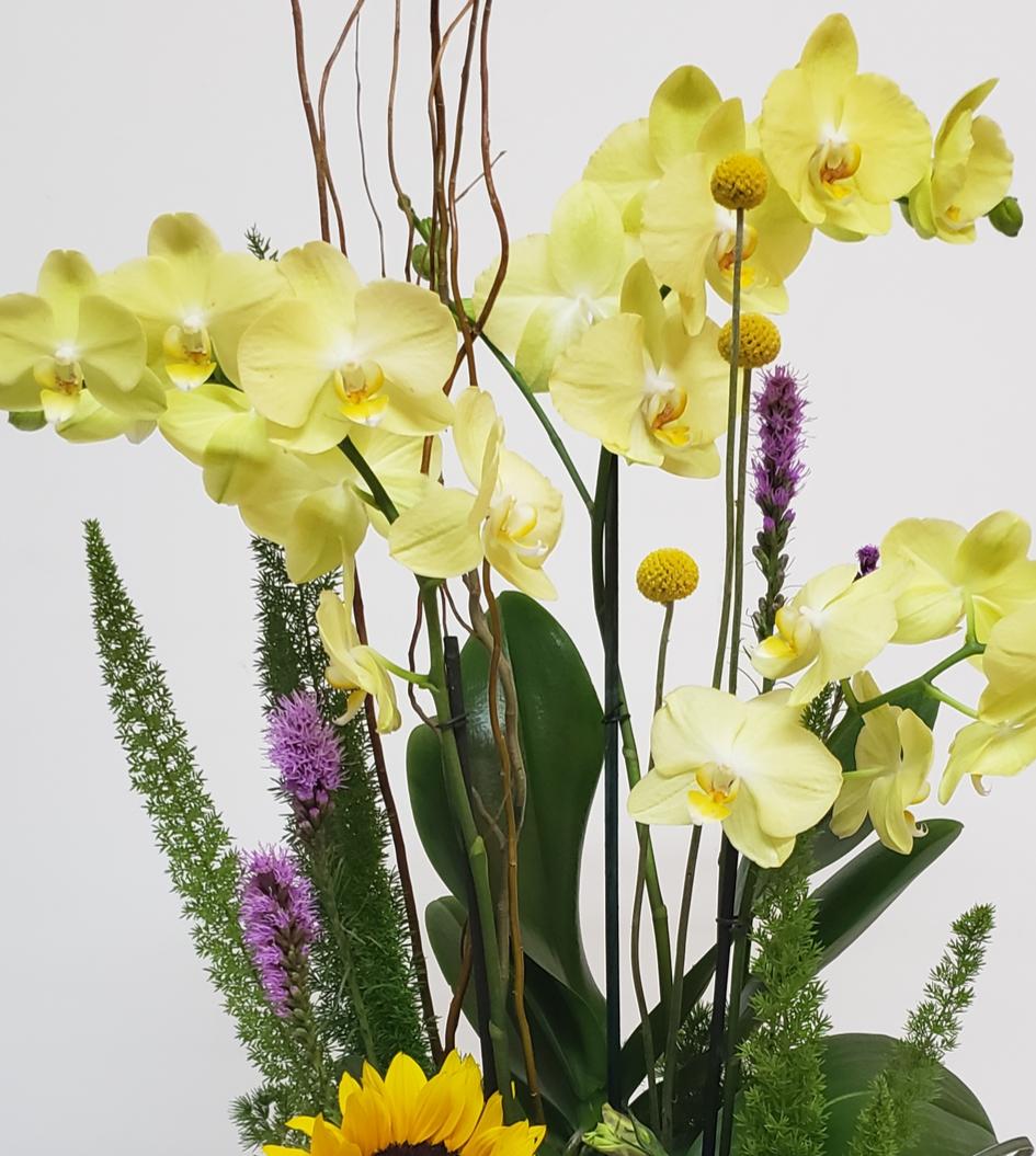 Arreglo de orquídeas amarillas en caja 3 piezas