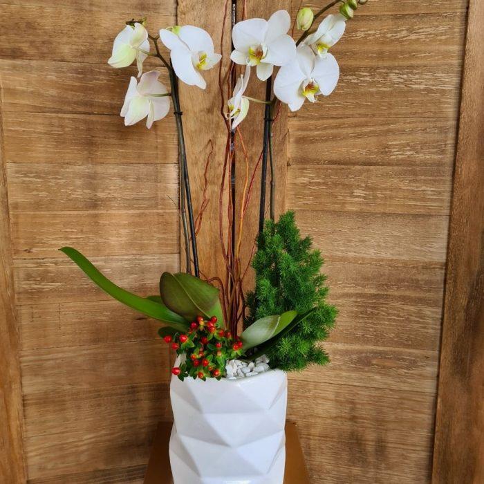 Arreglo de Orquídea Phalaenopsis Blanca