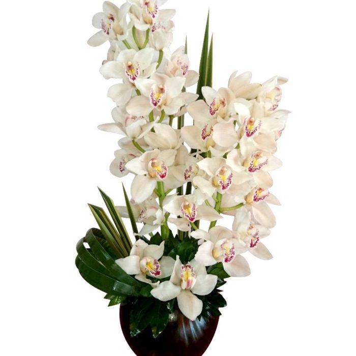 Arreglo de orquídeas cymbidium 2 piezas