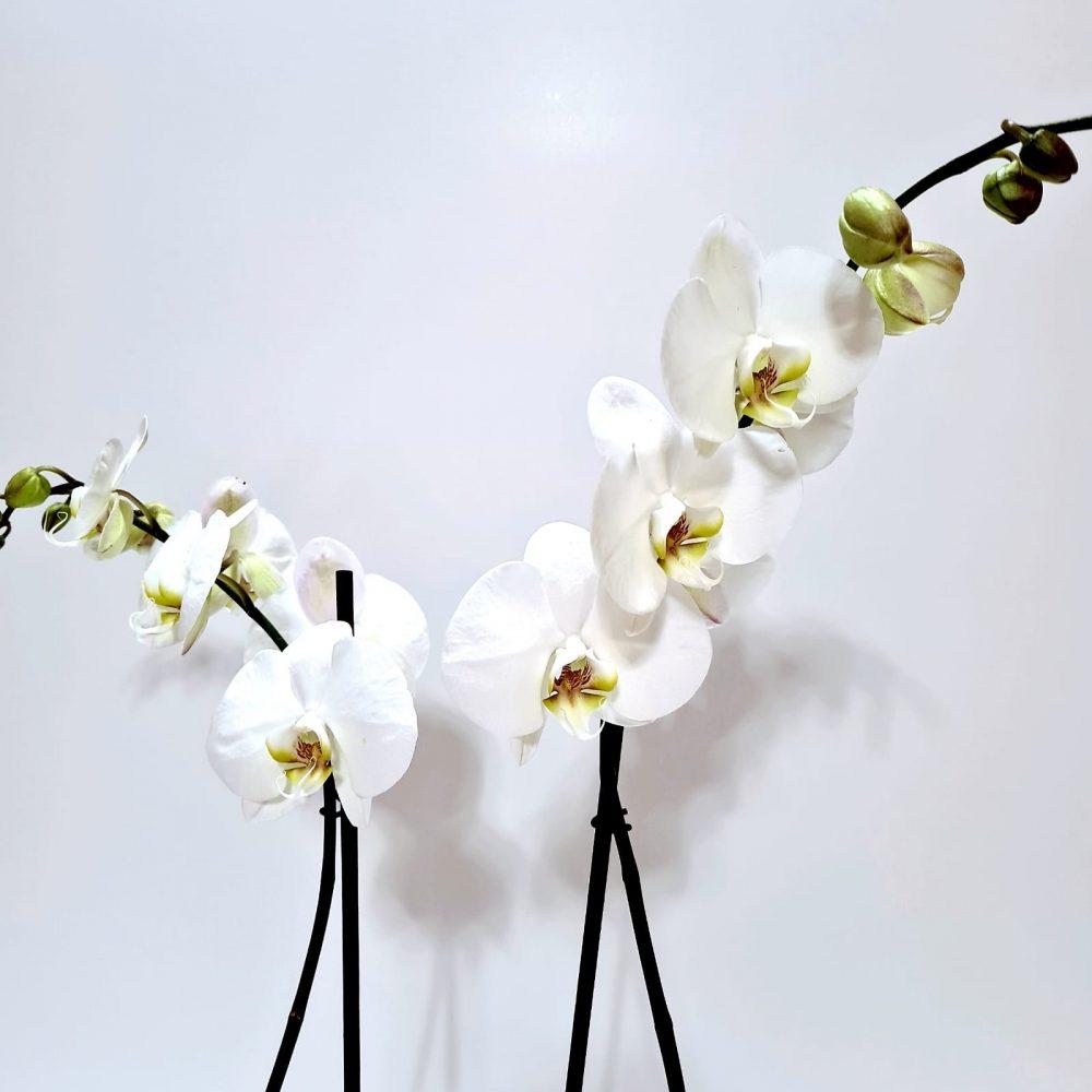 Arreglo de orquídea