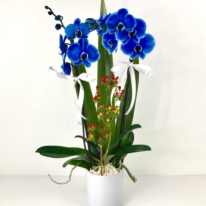 Arreglos de orquídeas a domicilio