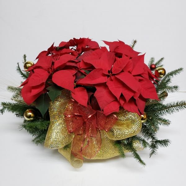 Canasta de Nochebuenas y pino
