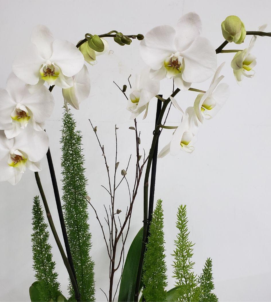 Envío de Orquídeas a Domicilio