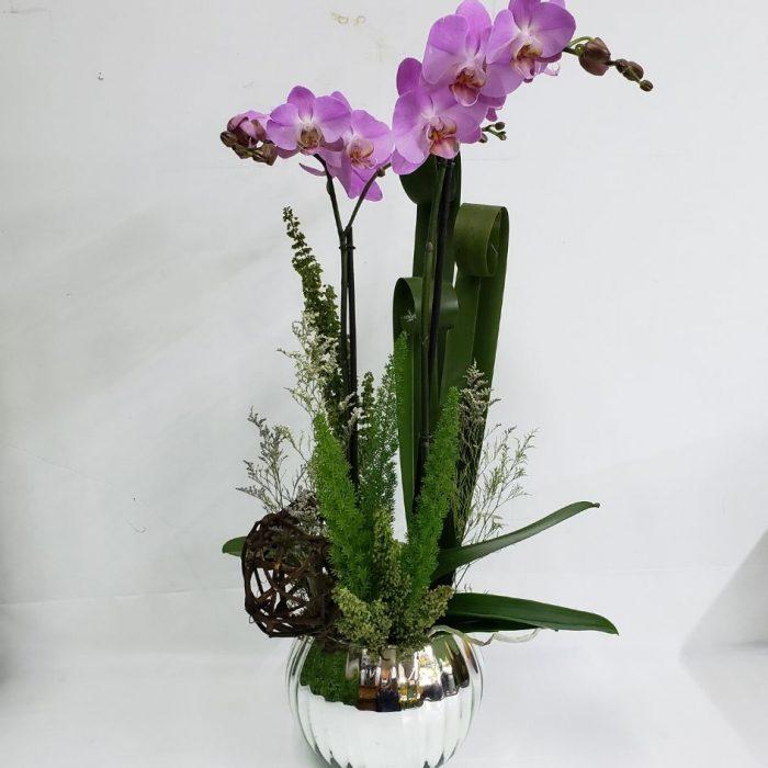 Envió de Orquídeas a Domicilio
